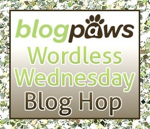 Blogpaws Wordless Wednesday Blog Hop Logo