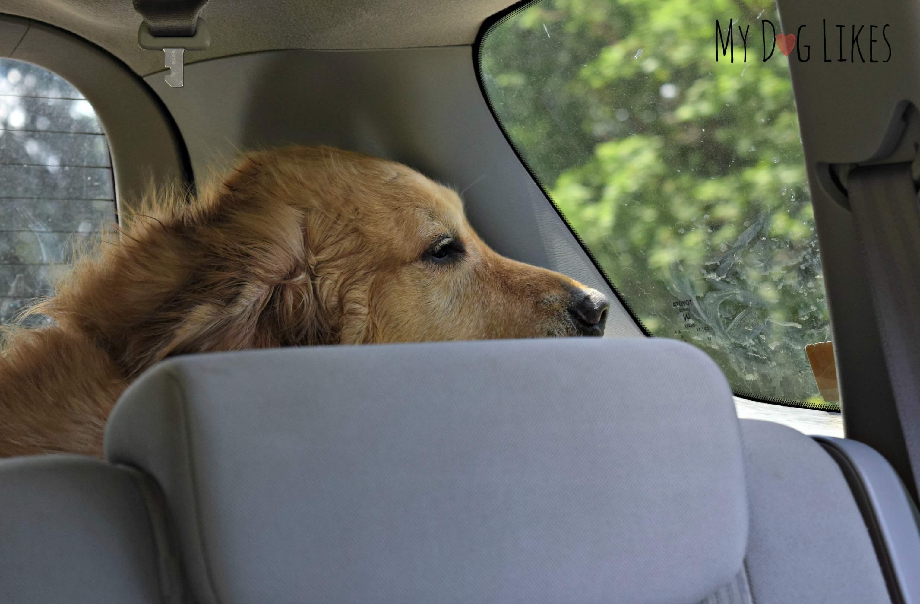 Dog Friendly Hikes Near Yellowstone