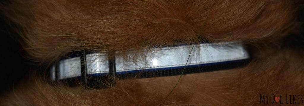 Closeup of the Illumidog Reflective Dog Collar at night