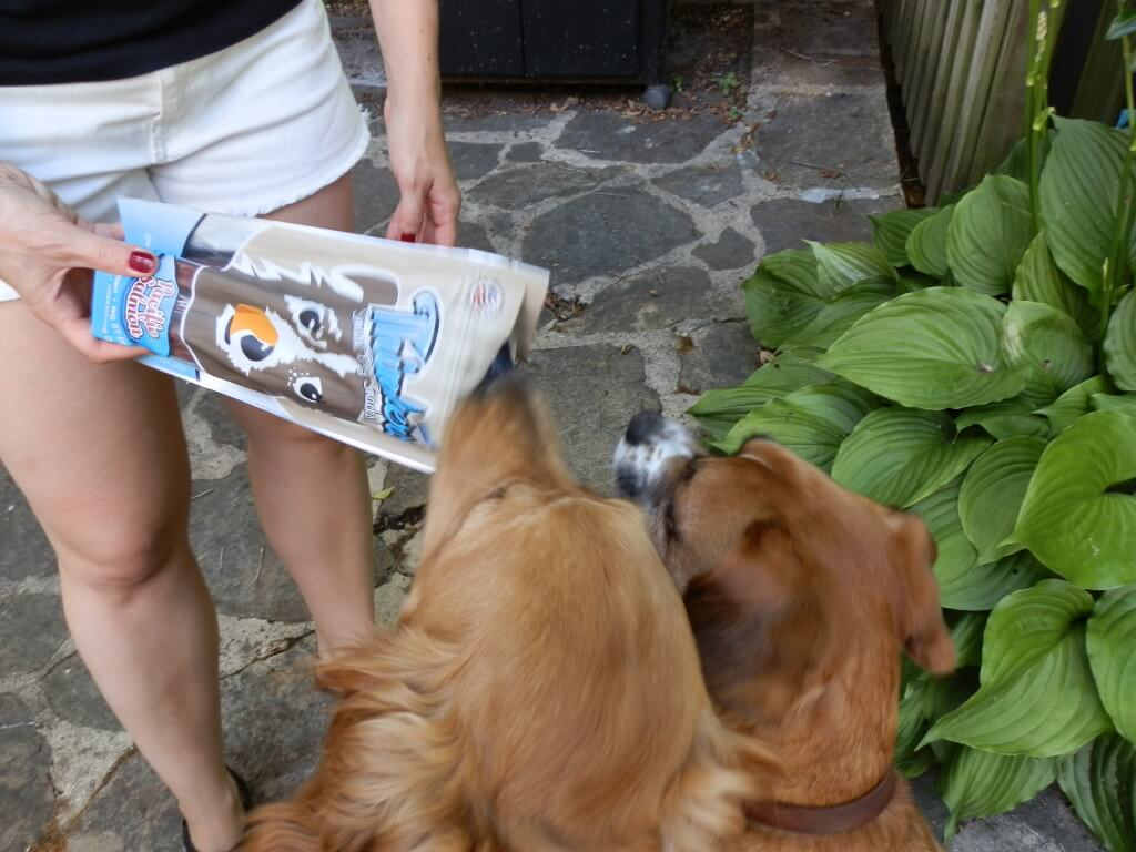 Charlie and Mia getting their first taste of Plato's Salmon dog treats.