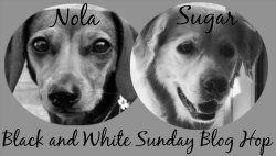 Nola and Sugar Black and White Sunday Logo