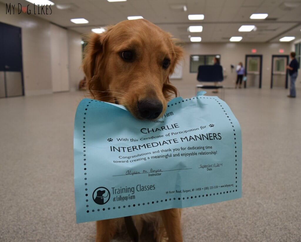 Charlie posing with his Intermediate Manners certificate
