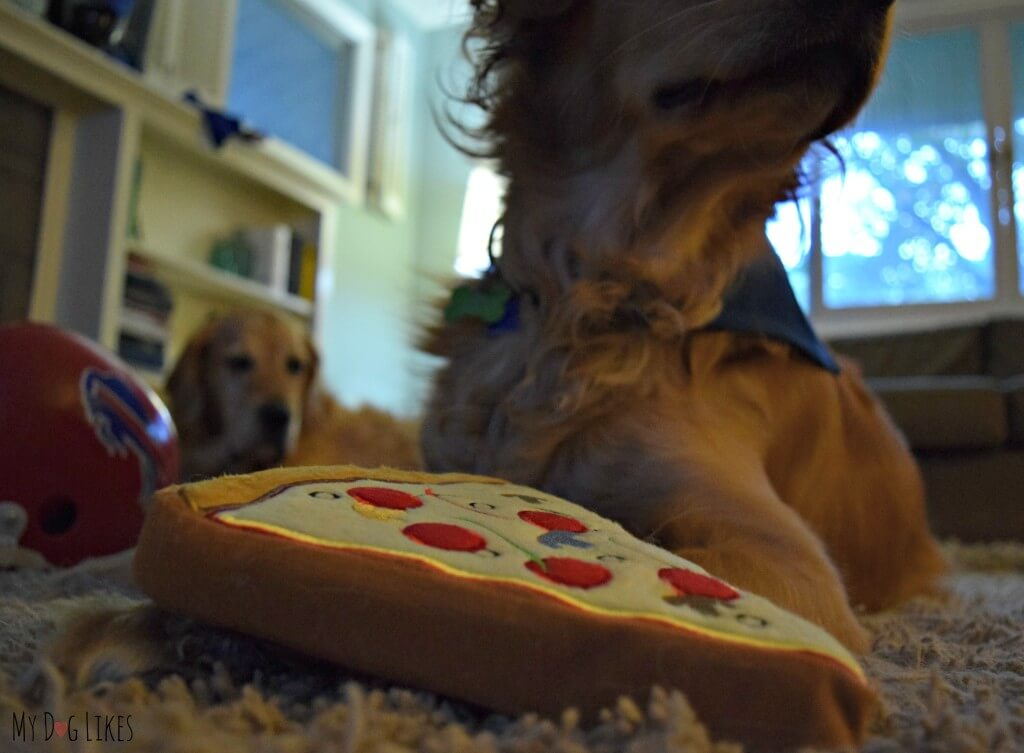 A jealous Harley looking on as Charlie plays with his new pridebites toy