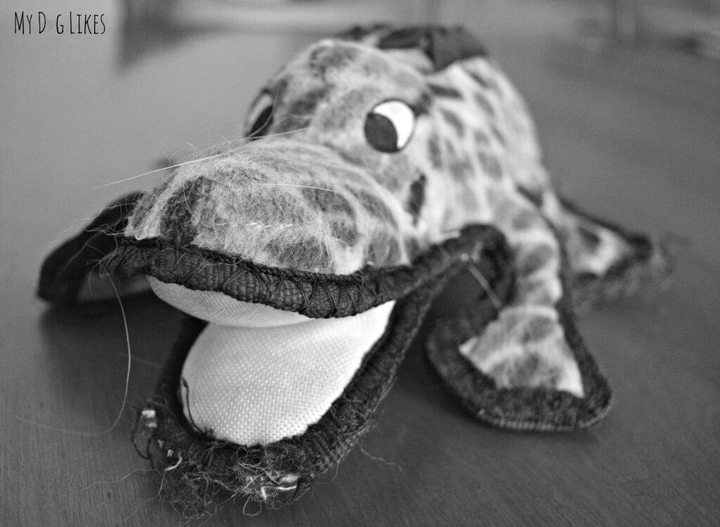 Tuffy's Alligator Dog Toy has held up in our house for almost 5 years! It is an extremely durable dog toy!
