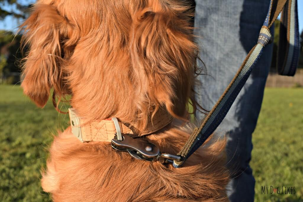 The ALU dog collar attached to leash