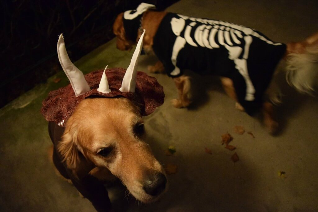 Harley and Charlie in their dog Halloween costumes