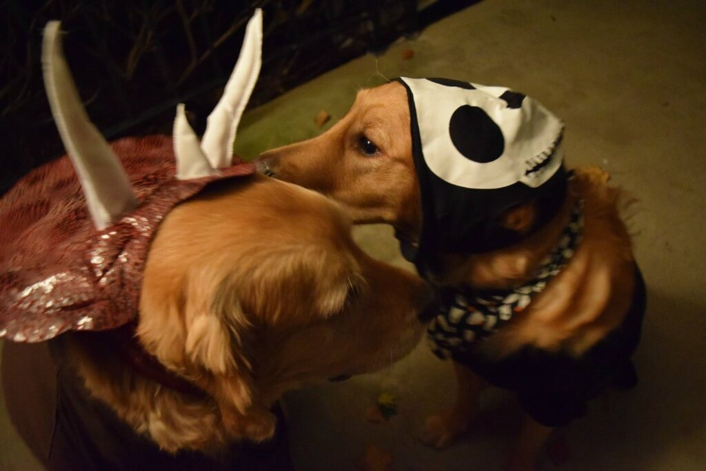 Charlie trying to let Harley know that something is on his head!