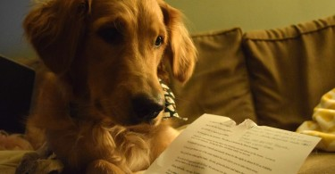 Our puppy Charlie trying to read his love letter!