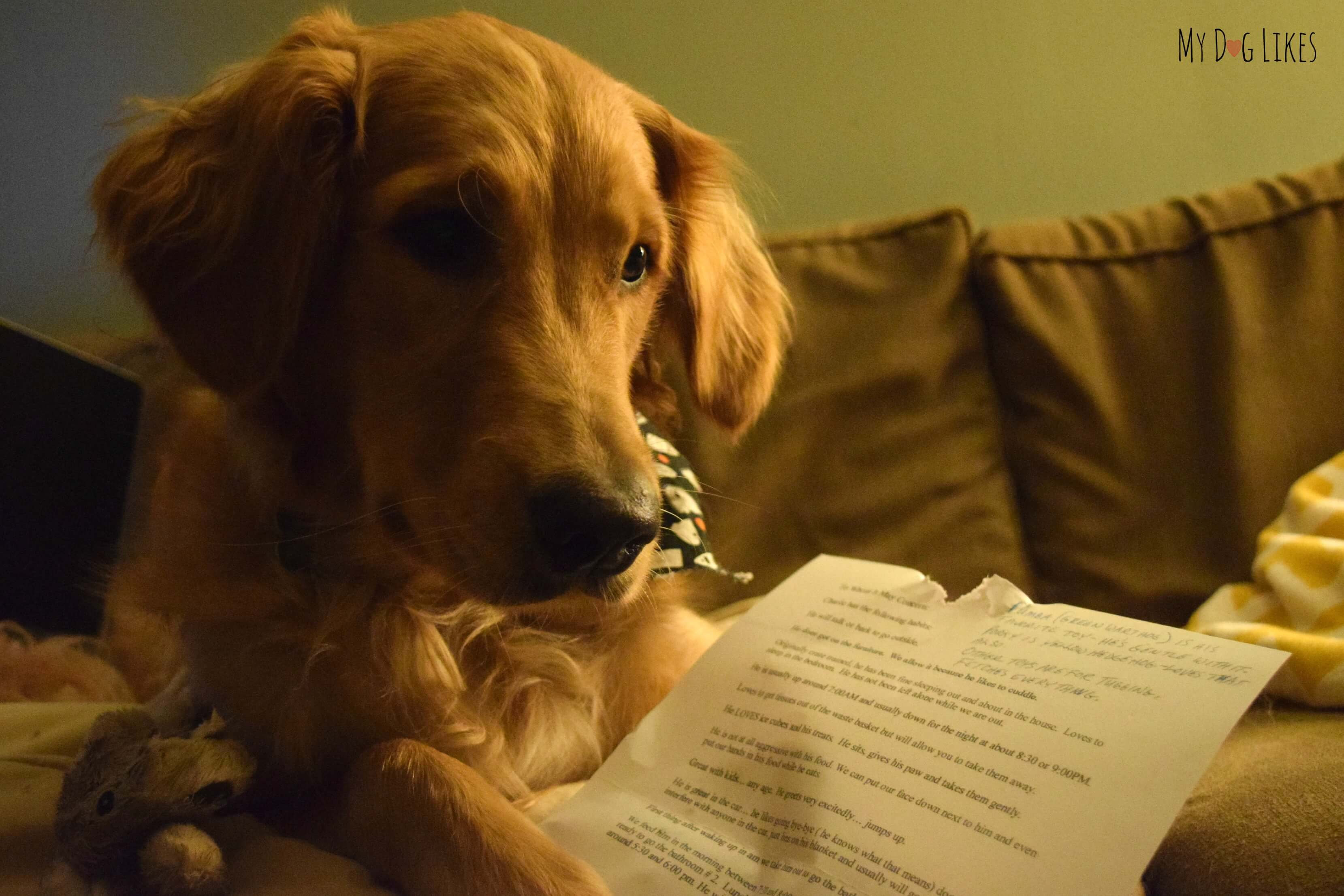 Love Letter - A Dog Adoption Story from Charlie's First Family