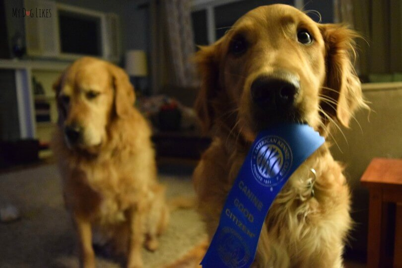 Becoming A Canine Good Citizen