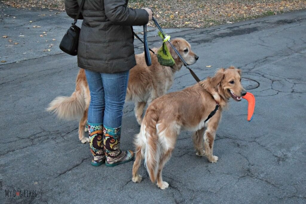 The Fifth Paw leash attachment makes walking with 2 dogs much more manageable.
