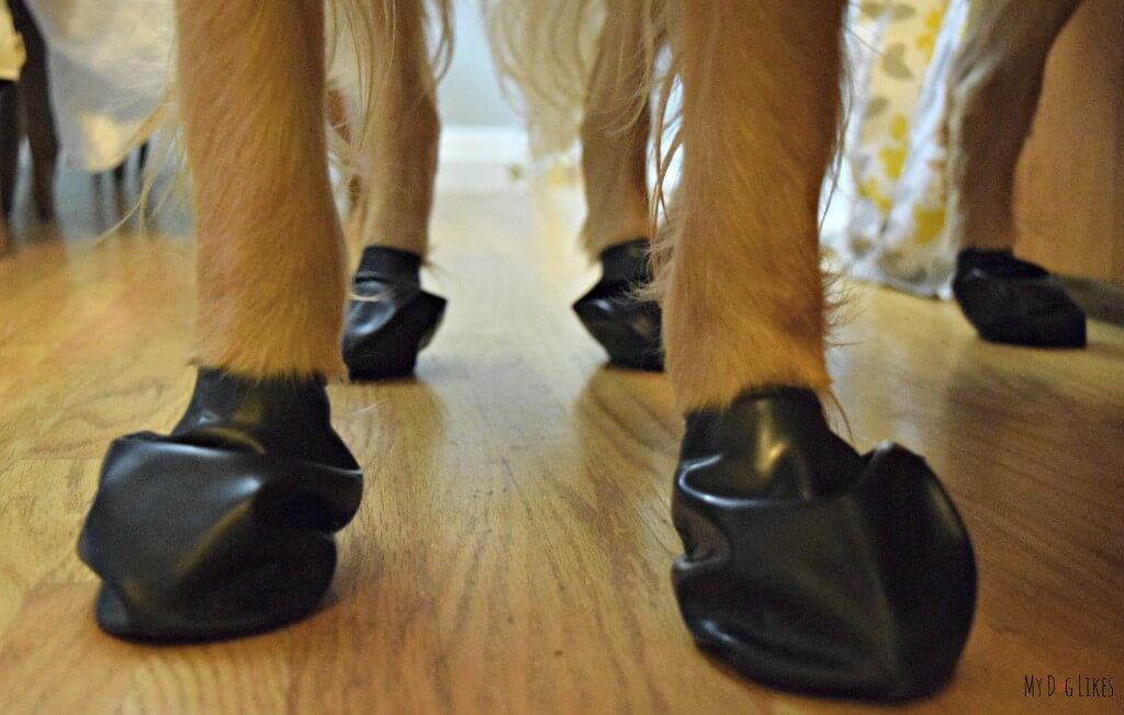 How Long Can Dog Wear Pawz Dog Boots