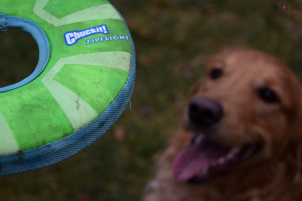 The Chuckit! Zipflight is perfect for fast dogs with lots of energy. It is also soft enough to be caught mid-air!