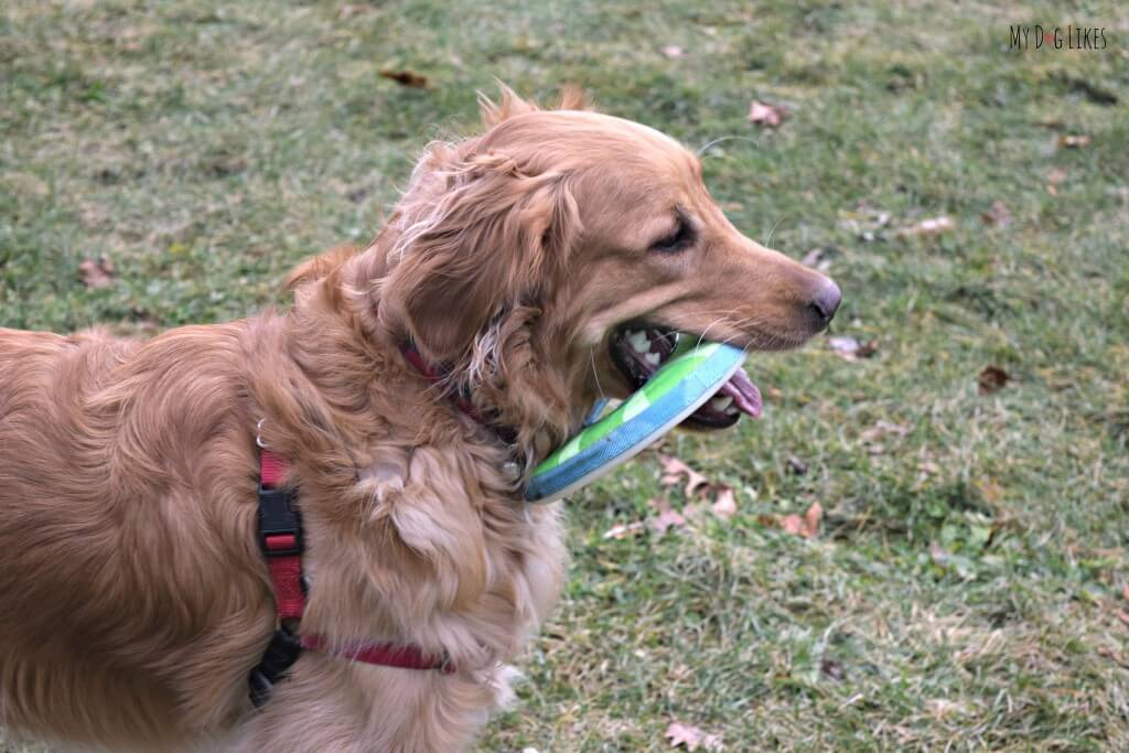 Chuckit! Ziplight Dog Toy Review