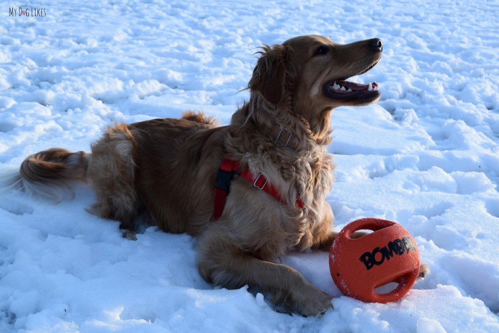 The Zeus Bomber is one of our favorite outdoor dog toys.