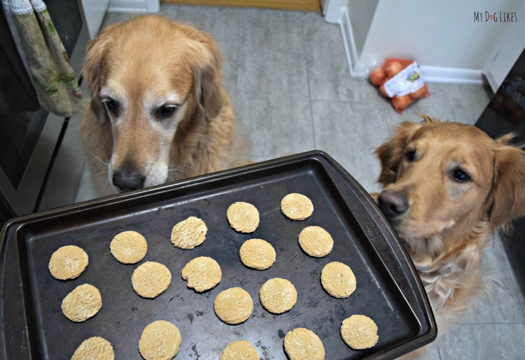 The Dogs Cookies from Paws Barkery look and smell so good, you can pass them off as homemade!