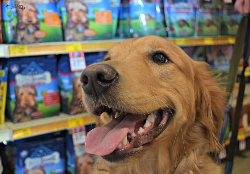 Charlie shopping at Petsmart for some Dental Chews! There were tons of options to choose from!