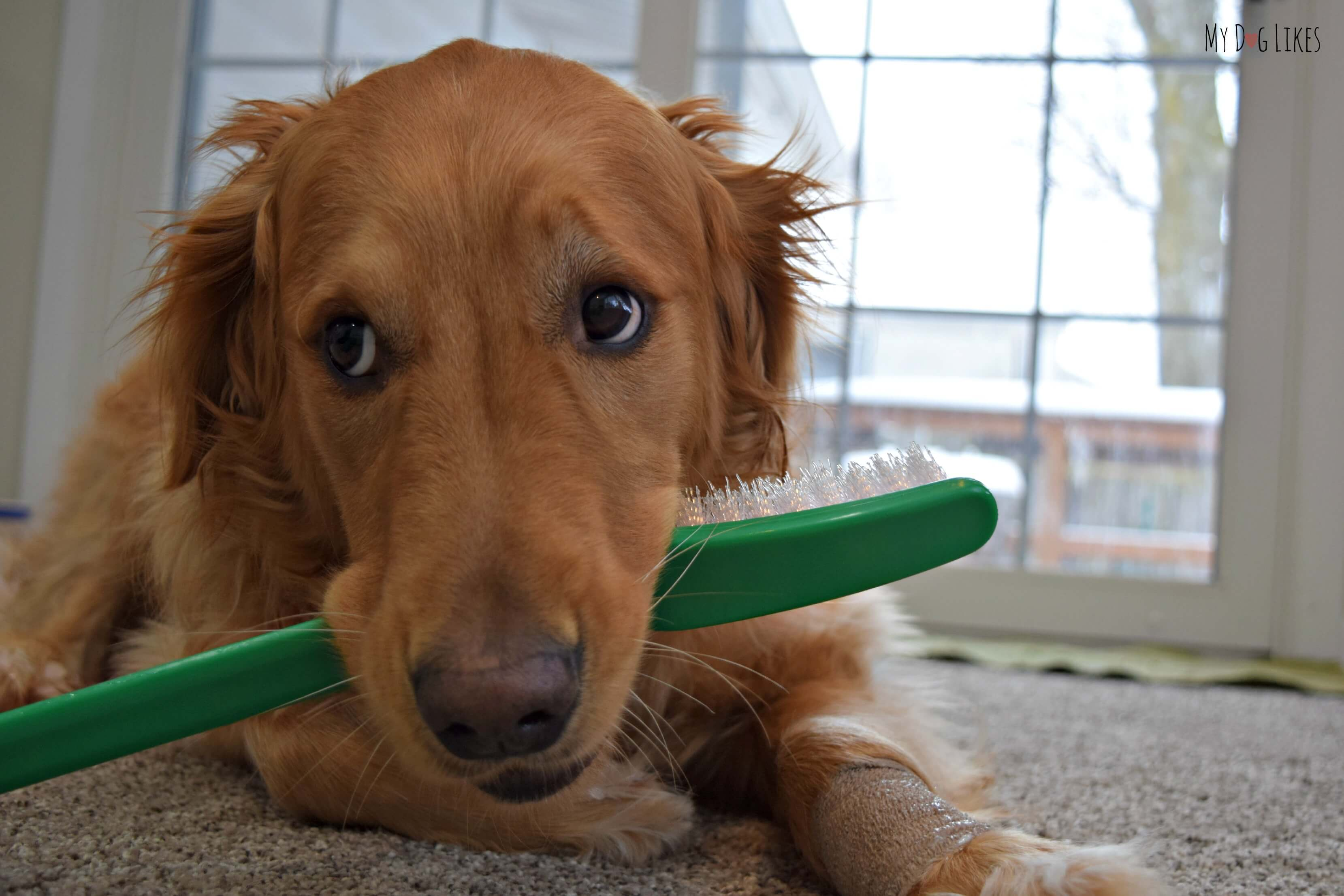how to keep dogs teeth clean without brushing
