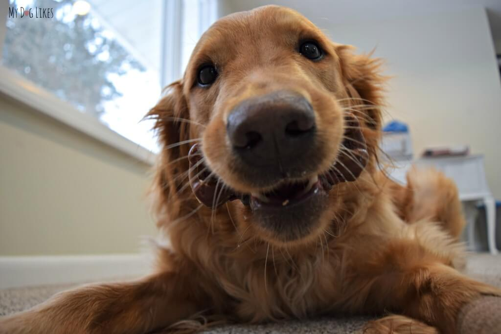 Dental Chews for Dogs do a great job in cleaning teeth and freshening breath in between brushings!