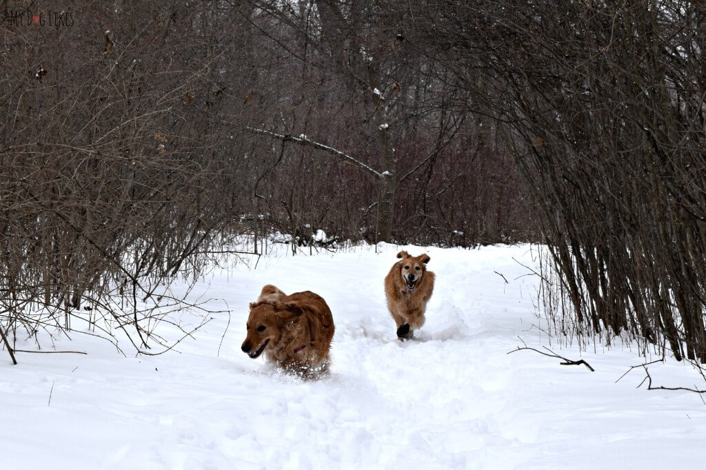 Our dogs running along the Creek Trail at Black Creek Park!