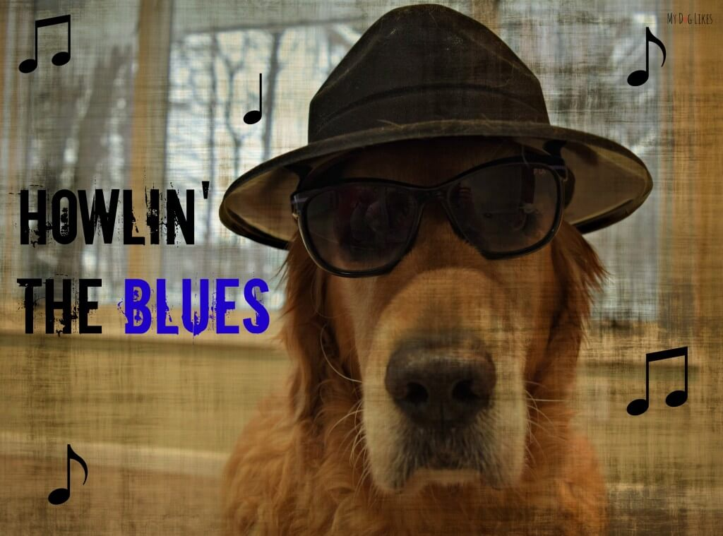 "See what has Harley ""Howlin' the Blues' over at MyDogLikes!"
