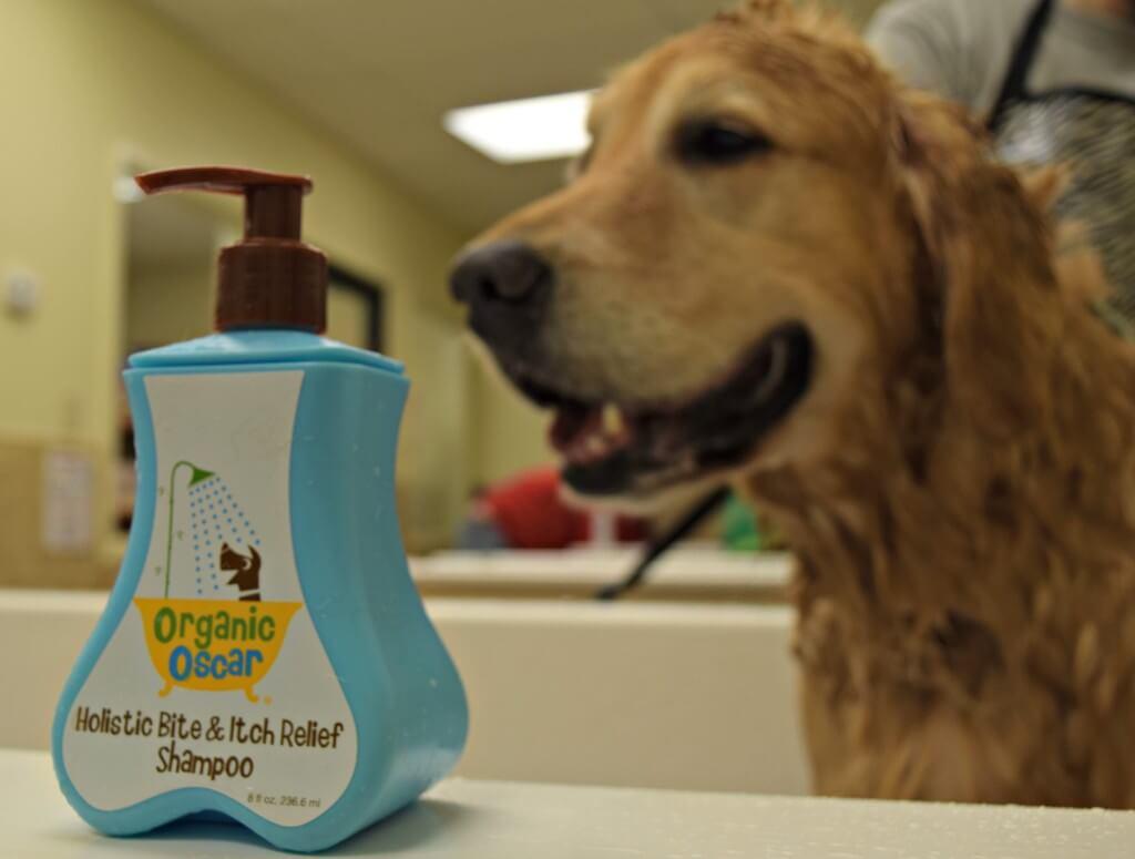MyDogLikes reviews Organic Oscar all natural dog shampoo