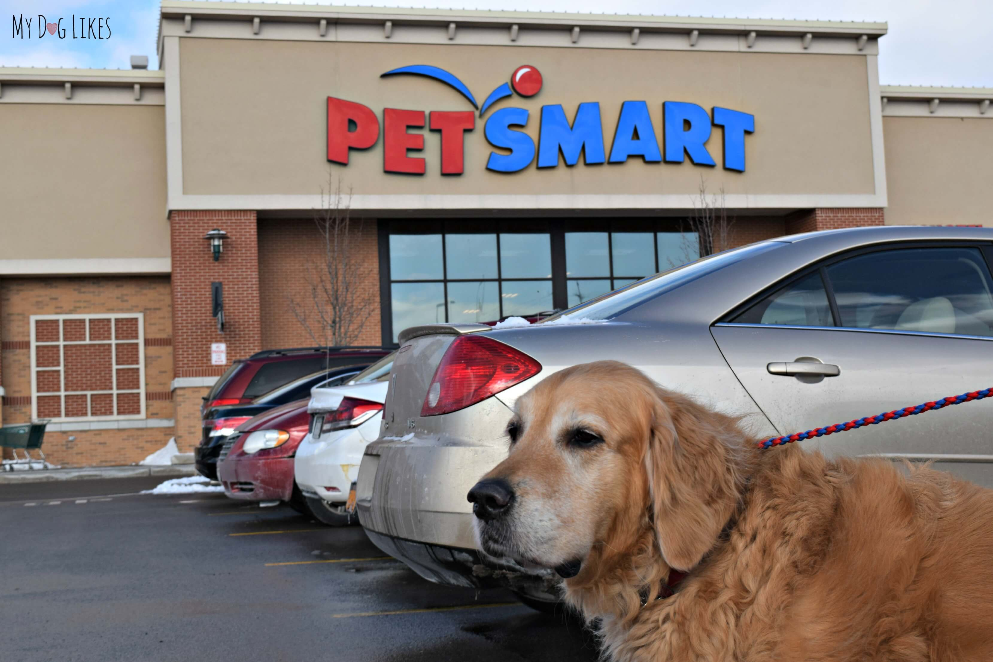 selection petsafe white health into doors door pet great petsmart check the good heading dental for out deals month with to fabulous aluminum and large dog