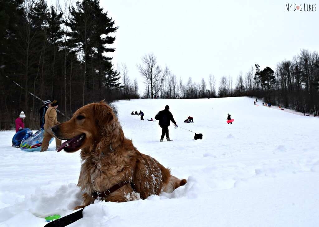 Charlie taking in the sights and sound of the Black Creek Park sledding hill in Chili, NY!