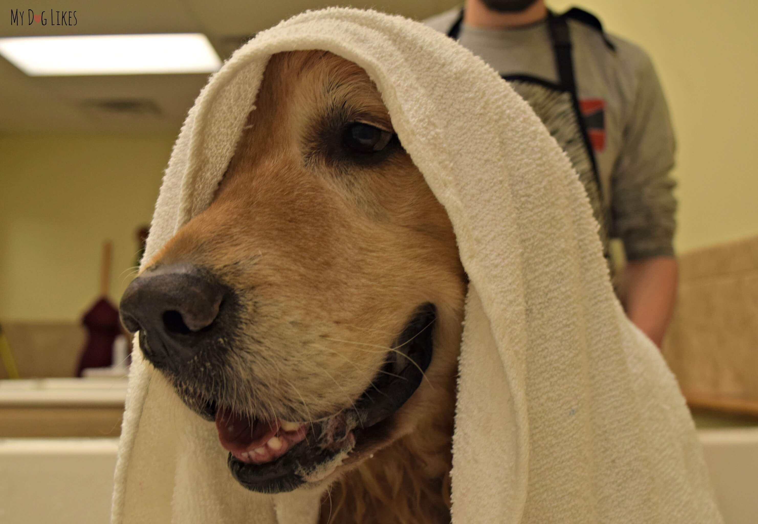Petsaver healthy pet superstorepetsaver healthy pet giving harley a towel dry at petsaver superstores self wash stations in rochester ny solutioingenieria Gallery
