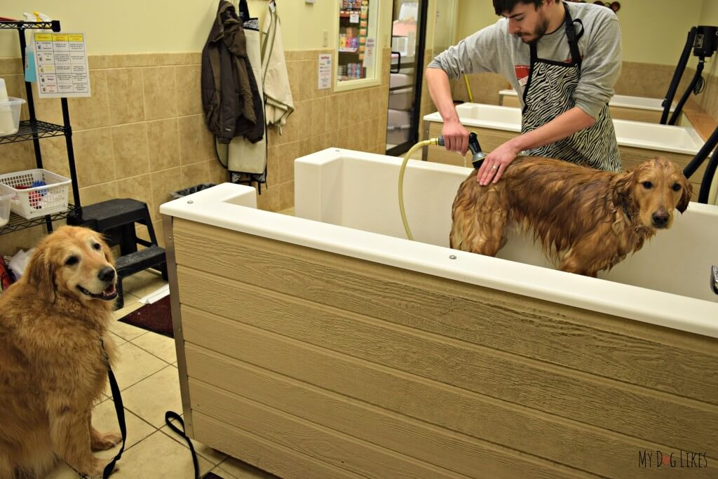 How To Bathe A Dog A Step By Step Guide