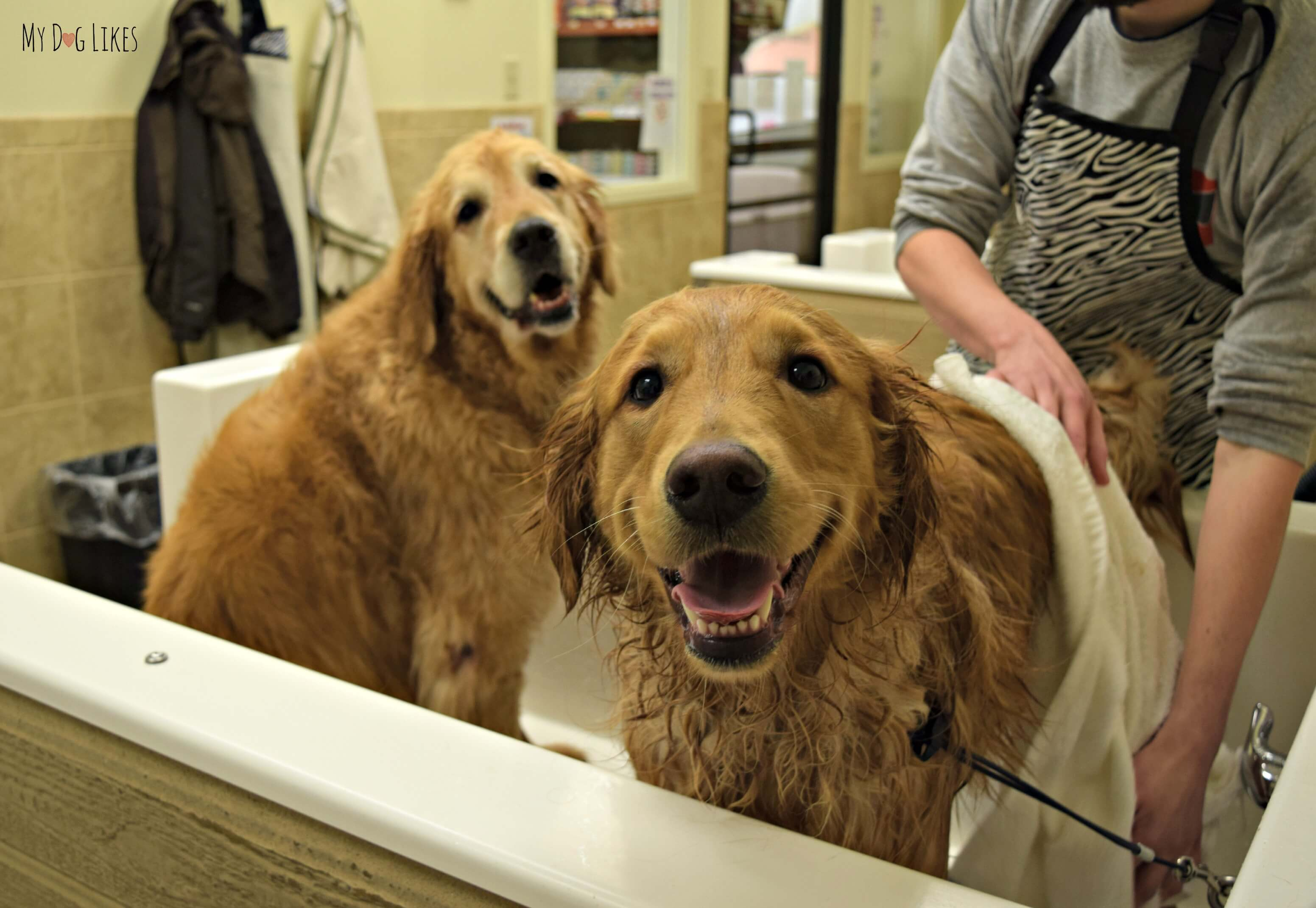 How to bathe a dog a step by step guide harley jumped into the dog bath tub while we were giving charlie a bath solutioingenieria Gallery