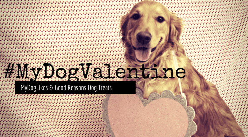 MyDogLikes and Good Reasons Dog Treats present the #MyDogValentine photo contest! Show us the love that you and your dog share!