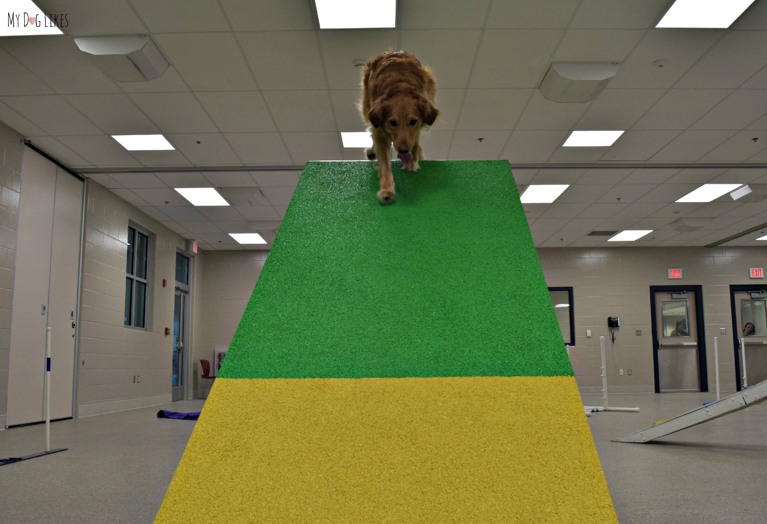 Charlie\'s Adventures in Dog Agility