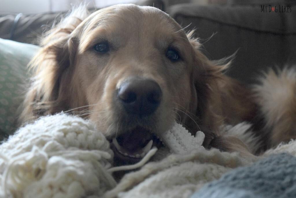 Can My Dog Eat Nylabone