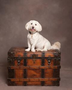 "Adorable Posha - Rescue dog and author of ""What Kind of Dog Am I?"""