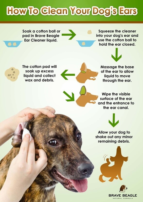 homemade dog ear cleaning solution