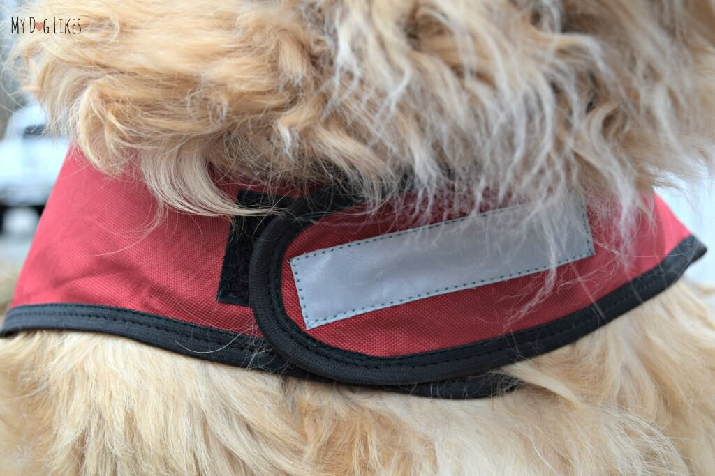 The adjustable chest strap made the PooBoss extremely convenient to take on and off and even switch between dogs