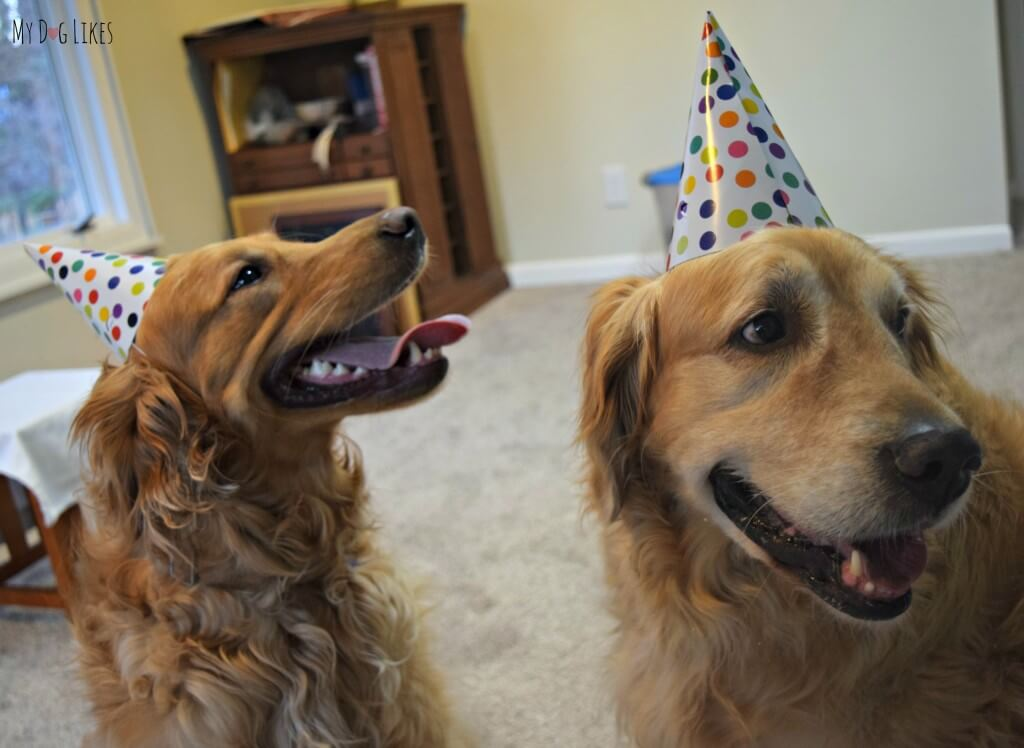 Dogs In Party Hats For The Dog Birthday