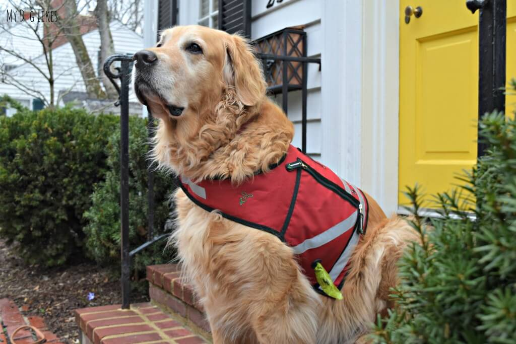 The K9 Utility Vest from PooBoss comes with a built in Dog Poop Bag Dispenser!