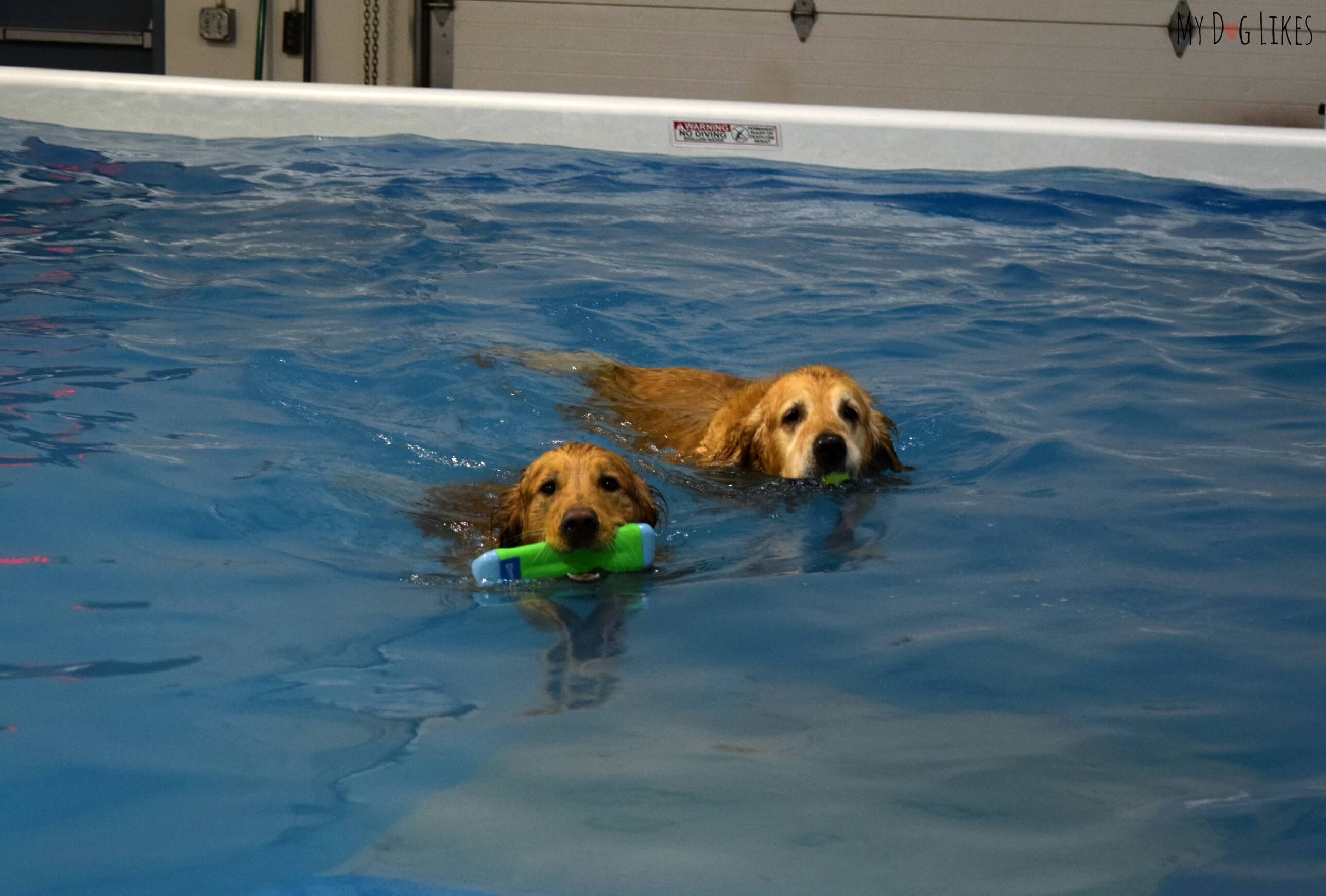 coolblue conditioning indoor dog swimming rehabilitation center
