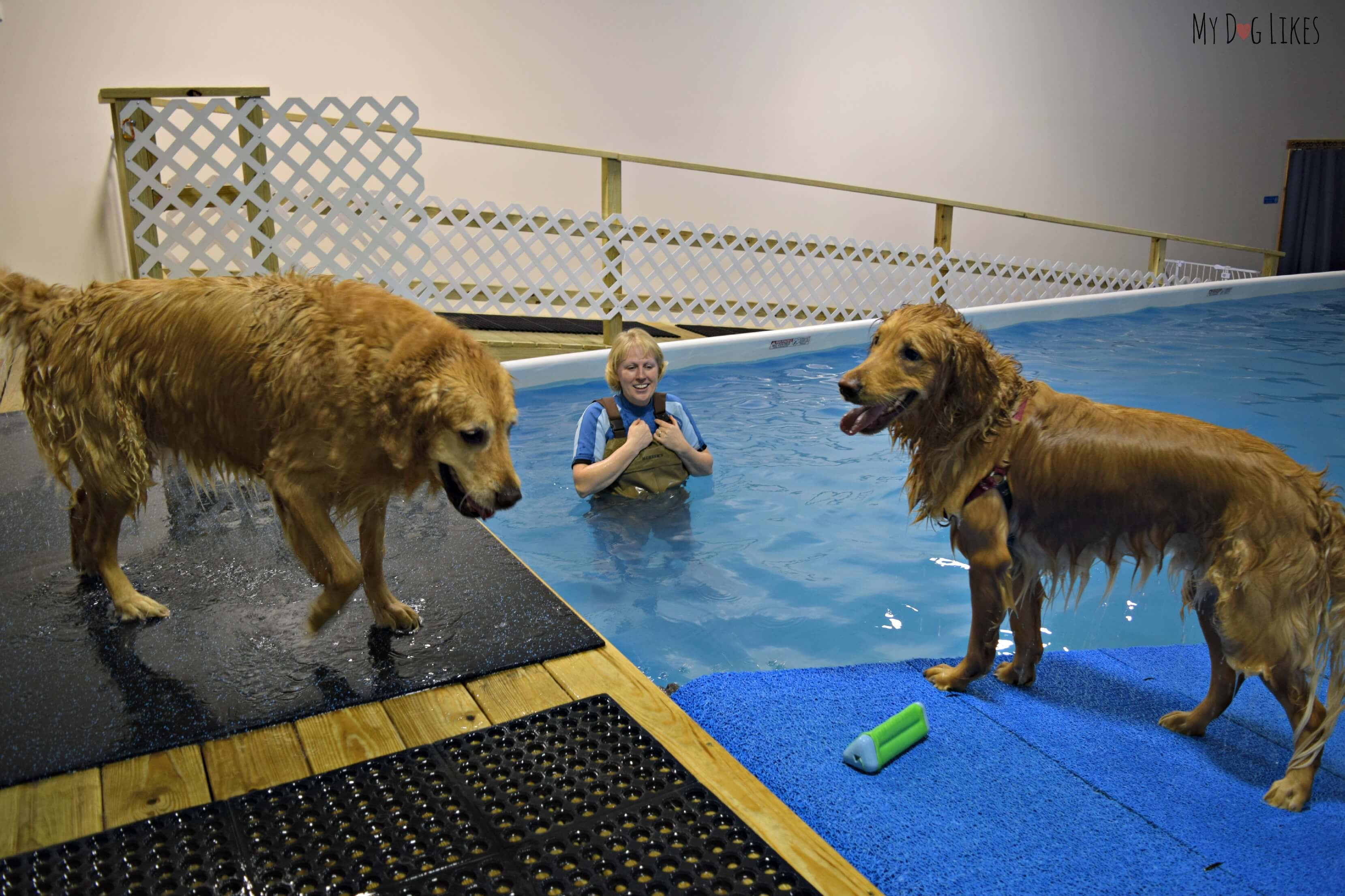 Coolblue Conditioning Indoor Dog Swimming