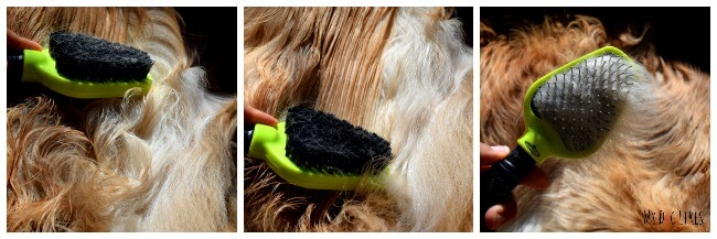 Wondering how to detangle dog hair? See how we use Isle of Dogs conditioning spray to help!
