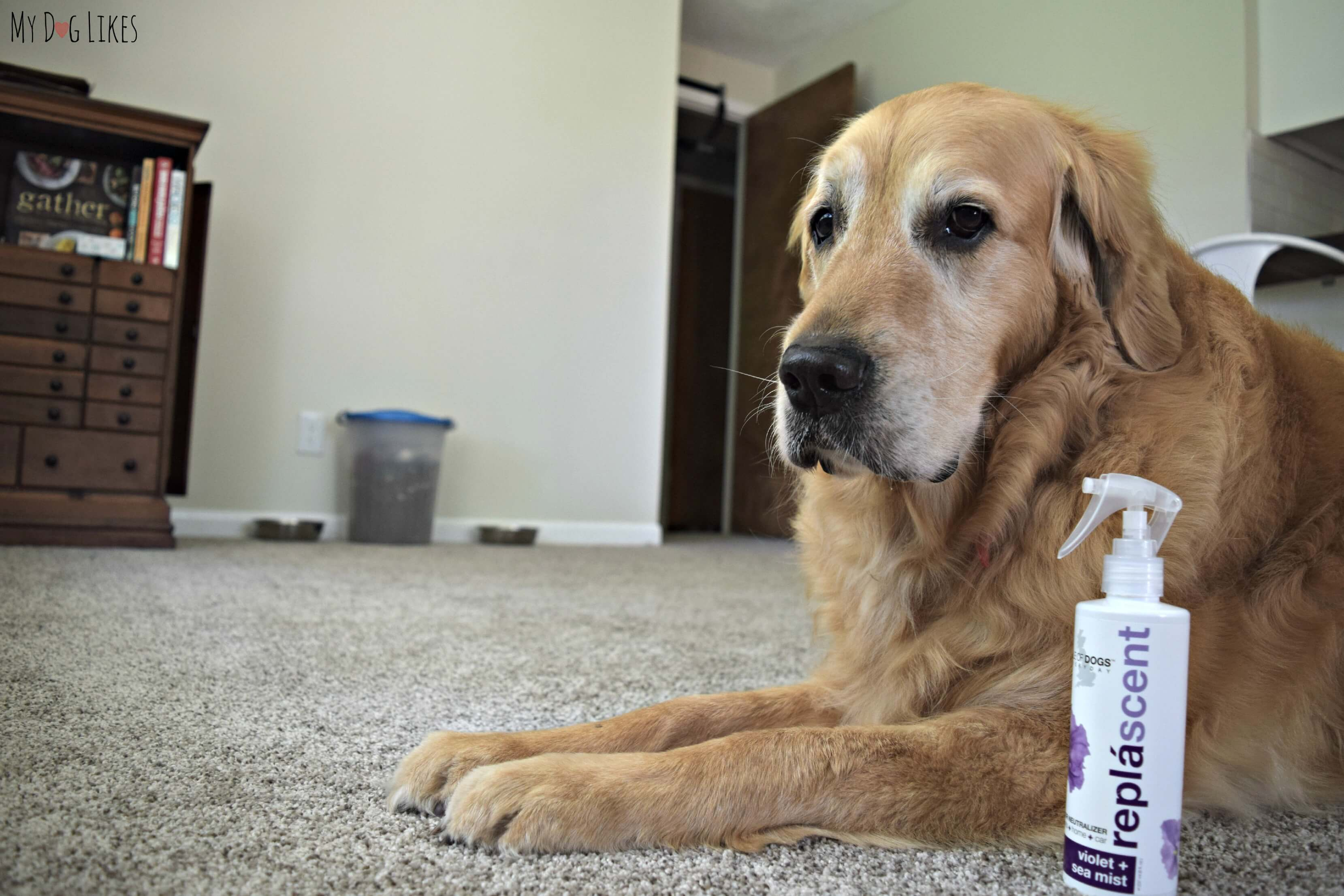 Isle Of Dogs Grooming Products Review Not Just For Bath Time