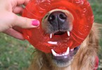 Visit MyDogLikes for the most comprehensive dog toy reviews on the web