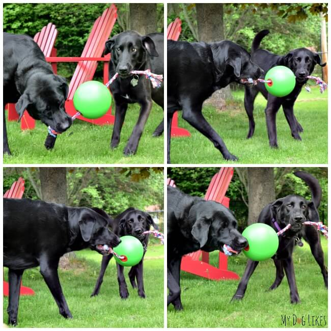 Yard Toys For Dogs : Dog outdoor toys model ideas