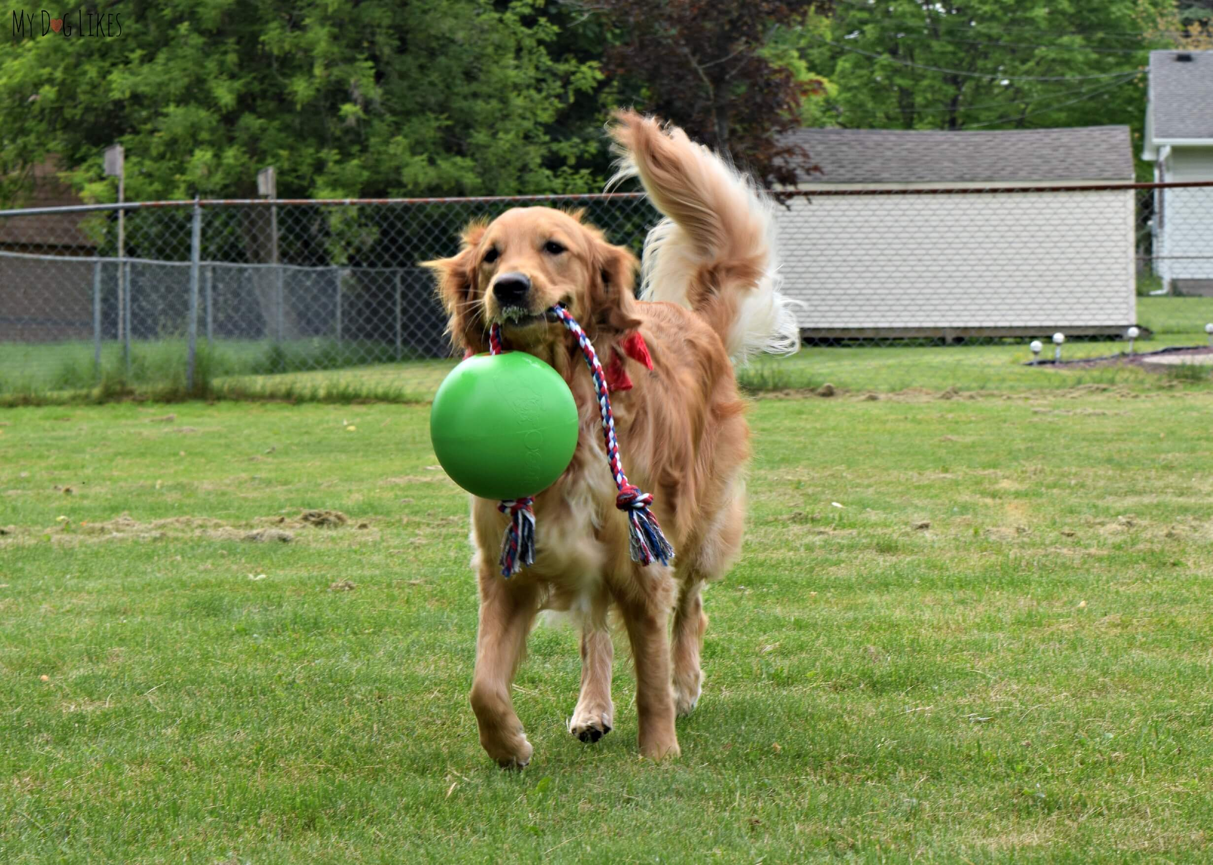 Yard Toys For Dogs : Fun in the sun best outdoor dog toys of