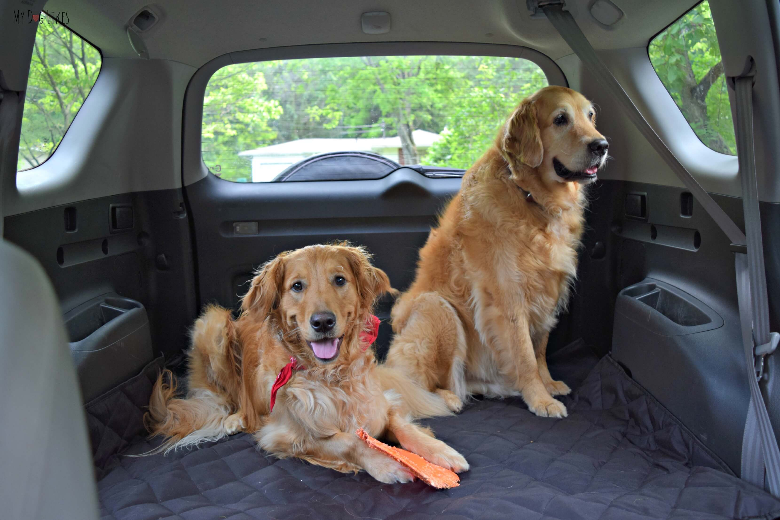 Mydoglikes Is Headed On A Major Dog Friendly Road Trip