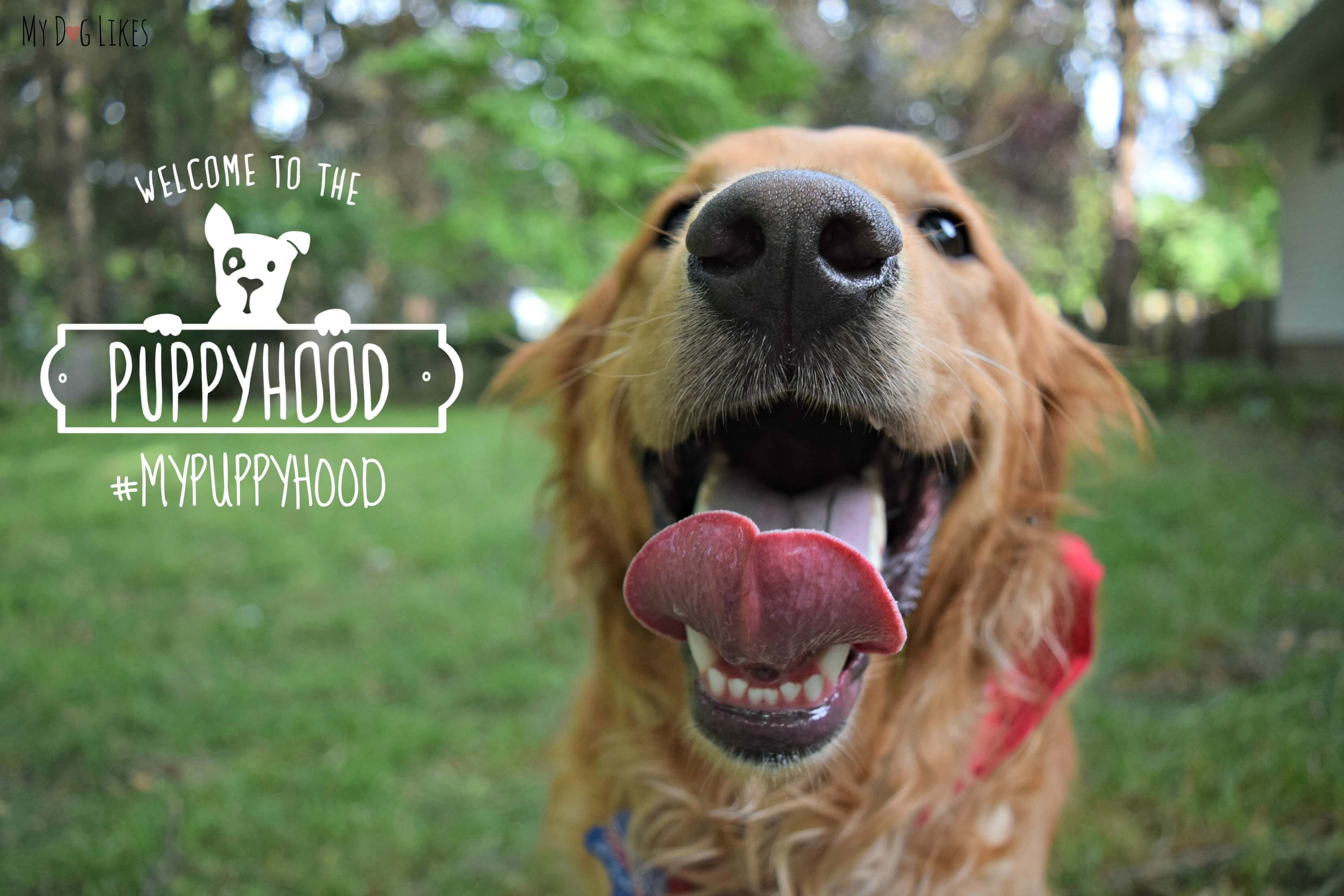 Its All Good In MyPuppyHood - 26 dogs puppyhood photos