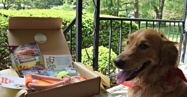 Charlie posing with his first Paw Pals With Annie subscription box