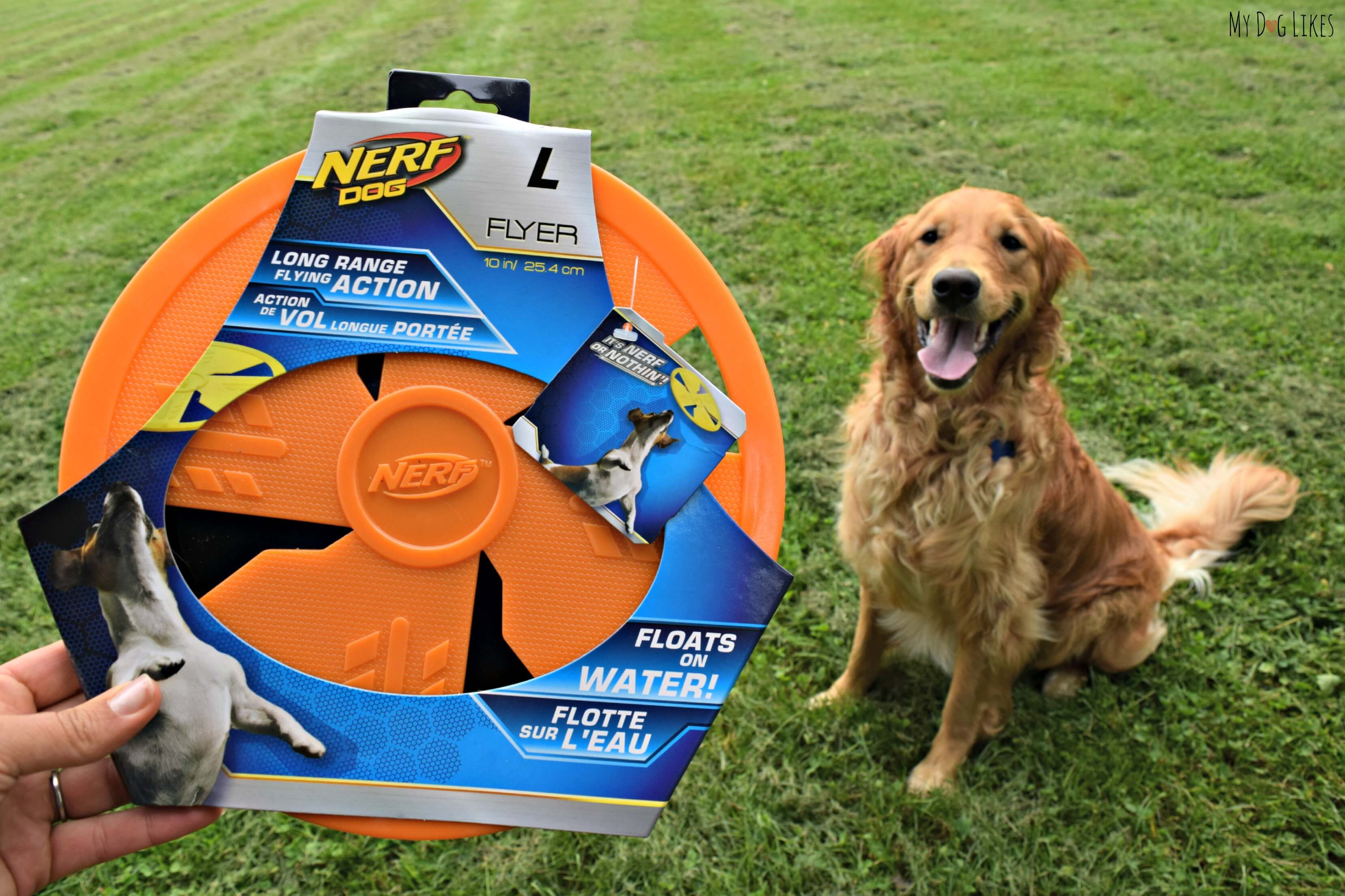 The Nerf Dog Flyer Is Rated #1 By Our Frisbee Connoisseur Charlie!